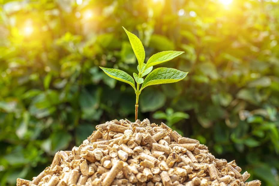 Biomass (image of plant growing out of biomass pellets)